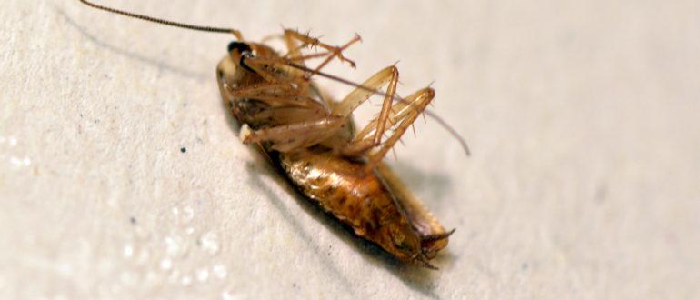 Дезинфекция от тараканов в Могилеве