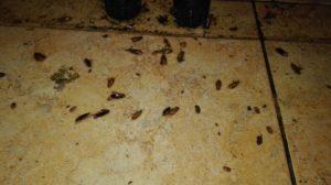 Морить тараканов в Могилеве