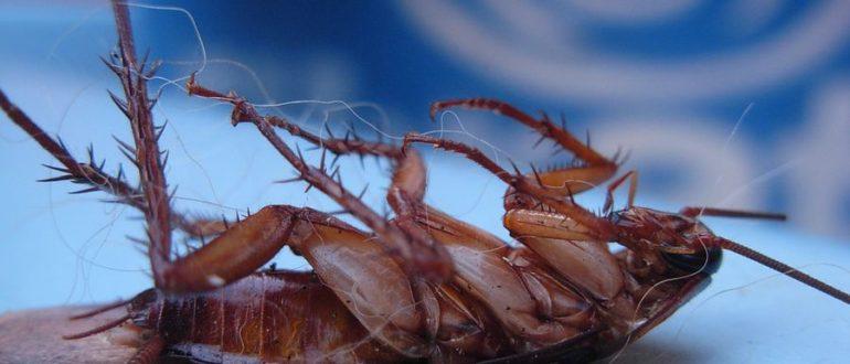 СЭС от тараканов в Могилеве