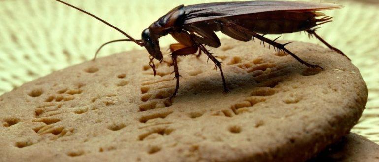 Травля тараканов в Могилеве