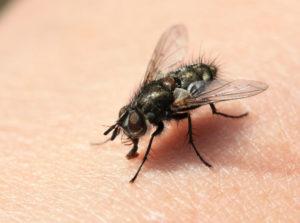 Уничтожение мух и мошек в Могилеве